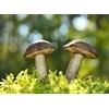Zatrucia grzybami - objawy, pierwsza pomoc, leczenie